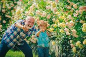 Grandfather And Grandchild Enjoying In The Garden With Roses Flowers. Dad Teaching Little Son Care P poster