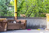 Three Well-nourished Alley Cats In An Improvised Forest Cat Shelter In A Chapel Well Pavilion, Marit poster