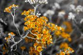 Selective Focus On Coastal Wild Flowers. Yellow Orange Coastal Wild Flowers In Summer poster