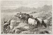 Cow herd watering old illustration, Auvergne, France. Created by Bonheur, published on L'Illustratio