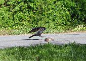 Roadkill Lunch