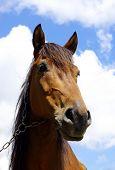 Pferd auf einem Hintergrund-Himmel