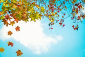 Beautiful Autumn Leaves And Sky Background In Fall Season, Colorful Maple Foliage Tree In The Autumn poster