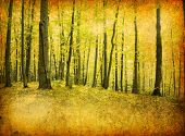 old forest photo