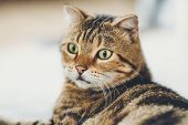 A Cat Face Closeup Cute Pet A Cat Face Closeup Cute Pet poster