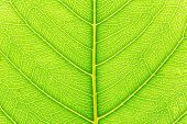 Plant Nature Background. Plant Texture For Design. Plant Background Of Leaf. Tree Leaf Plant Nature  poster