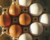 Organic White Eggs Vs. Farm Organic White Eggs Vs. Farm Eggs. White Natural Organic Eggs And Chicken poster