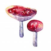 Red Fly Agaric In Watercolor On Pink Purple Background. Forest Mushrooms. Autumn Forest. Realistic S poster