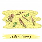 Root And Stems Of The Indian Ginseng On The Wooden  Cutting Board. Curved Shape Of The Board With Wo poster