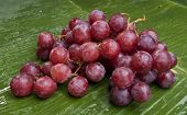 fresh delicious wet grapes on a banana leaf