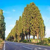 Bolgheri ciprestes famosa árvore Boulevard paisagem. Marco de Toscana, Itália