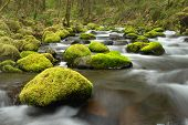 stock photo of vegetation  - This Picture of water flowing around mossy rocks was taken during the spring in the forests of Oregon - JPG