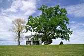 picture of screen-porch  - A solitary while house sits under huge oak tree on top of a hill during springtime - JPG