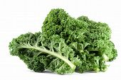 image of kale  - Wet kale leaves close up on white background - JPG