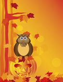 Halloween Owl Sitting On Pumpkin In Forest Illustration