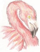 Pink Flamingo Sketch