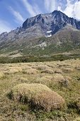 Moss Field At Torres Del Paine
