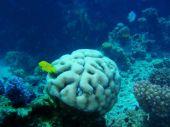Underwater Brain