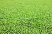 Green Synthetic Grass Sports Field