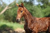 Portrait Of Nice Wet Foal