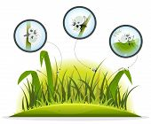 Funny Insect Character Inside Spring Grass