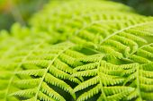 picture of fern  - The close up of green fern in the forest - JPG