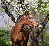 foto of horses eating  - Portrait of a horse under the tree - JPG