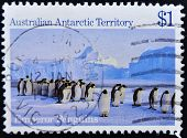 AUSTRALIA - CIRCA 1985: A stamp printed in Australian antarctic territory shows emperor penguins