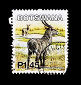 BOTSWANA - CIRCA 2002: A stamp printed in Botswana shows image of a water-buck/letimoga