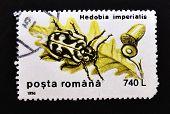 ROMANIA - CIRCA 1996: A stamp printed by Romania shows a Hedobia imperialis circa 1996.