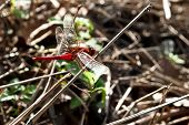 Dragonfly On A Background Of Haystack.