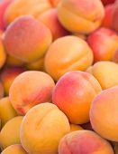 Organic Peaches and Nectarines