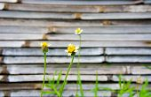 Flower Of Grass  With Old Bamboo Split Background