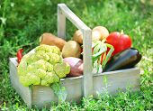 Fresh organic vegetables in wooden box outdoors