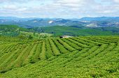 stock photo of mountain chain  - Impressive landscape at Dalat Vietnam in sunny day amazing cloudy sky chain of mountain far away tea tree in row line beautiful tea plantation wonderful country view for Da Lat travel - JPG