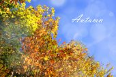 Fall Colors And Sky With Text