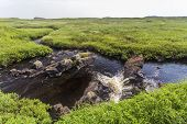 flowing stream in green meadow, Newfoundland