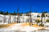 Landscape View Of Angel Terrace And Dead Trees In Yellowstone
