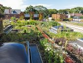 stock photo of photosynthesis  - Rooftop garden in urban setting  under blue sky - JPG