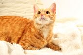 Red cat on blanket on fabric background