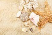 Seashells on sand, close-up