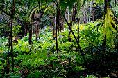 Heracleum Sphondylium, Common Names Hogweed Or Common Hogwee