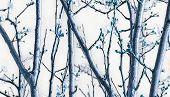 Nature Detail Digital Art