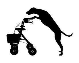 pic of rollator  - Detailed and accurate illustration of dog pushes rollator - JPG