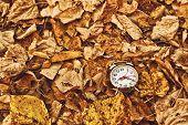 Vintage Alarm Clock In Dry Autumn Leaves