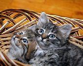 Cute Kitten In Punnet