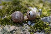 image of snail-shell  - Background with spring snail shells on moss - JPG