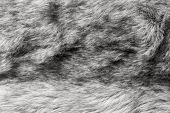 Abstract Texture Of Gray Fur Fabric