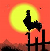 image of roosters  - vector silhouette of rooster in the morning - JPG