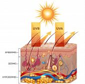 image of pigment  - Protected skin with sunscreen lotion - JPG